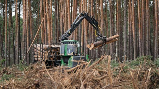 PHOTO: A forestry machine stacks logs on land cleared of trees at the site of the new Tesla Gigafactory, Feb. 17, 2020, near Gruenheide, Germany.  (Sean Gallup/Getty Images)