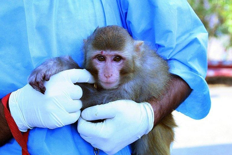 An Iranian scientist holds a monkey with light fur and a mole above its right eye, claimed to have been taken on January 28, 2013, before being sent into space. Iran's announcement that it had successfully sent a monkey into space stirred questions on the Internet on Saturday, with people pointing to differences between official images of the primate before takeoff and after landing