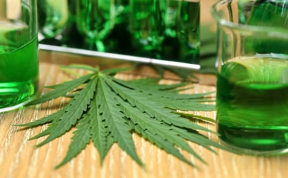 Marijuana leaves on table next to beakers filled with green liquid.