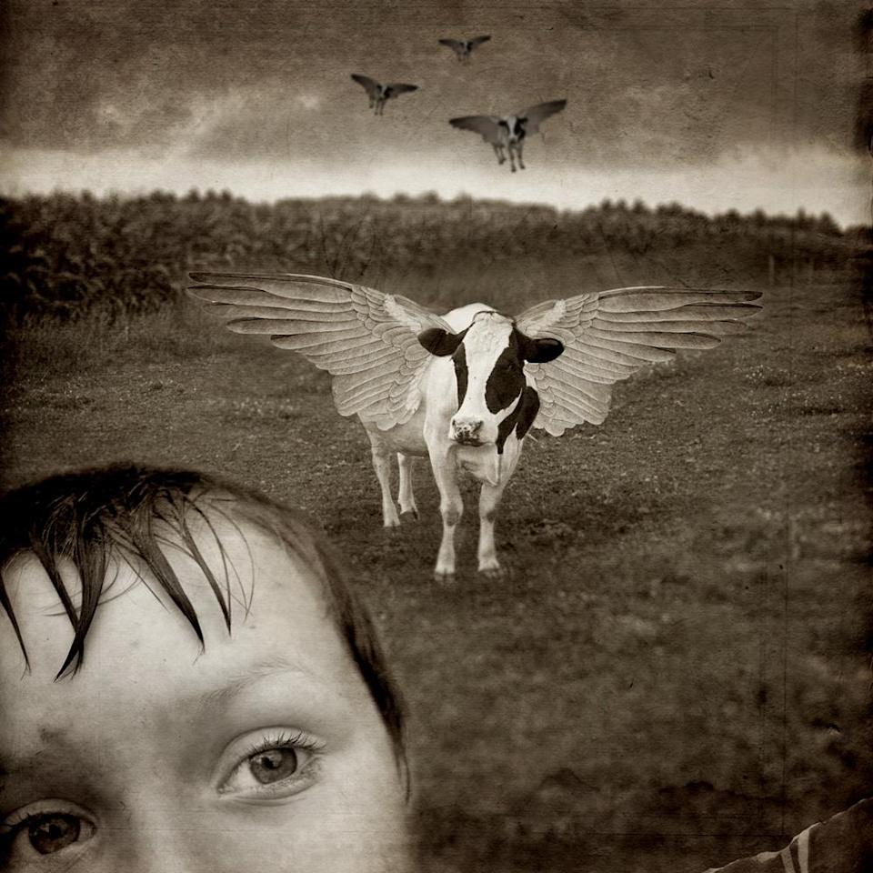 """<div class=""""caption-credit""""> Photo by: David Niles</div><b>See, Cows Can Fly</b>"""