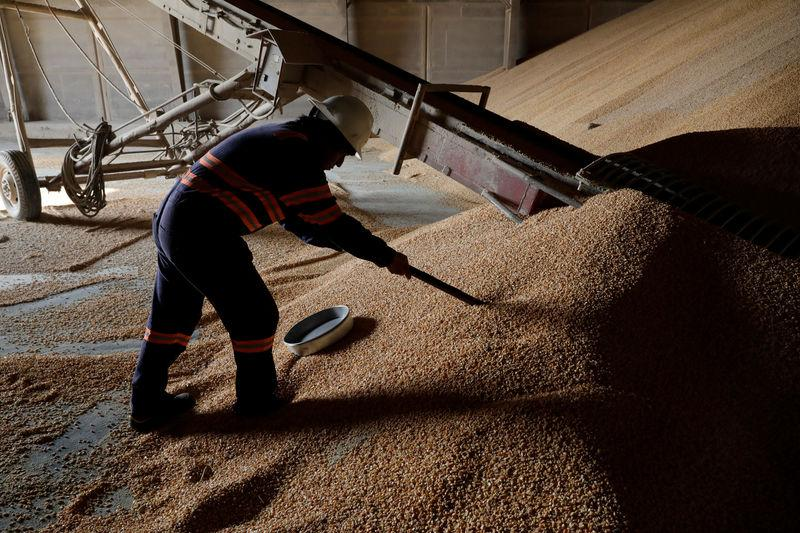 Employee takes samples of corn imported from Brazil for a quality test at a warehouse in Tuxpan