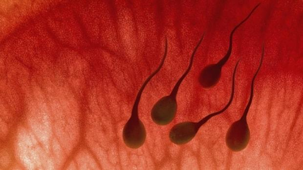 An estimated one in six couples struggles with infertility, which is classified as a disease. Yet few provinces cover the cost of treatment.  (iStock - image credit)