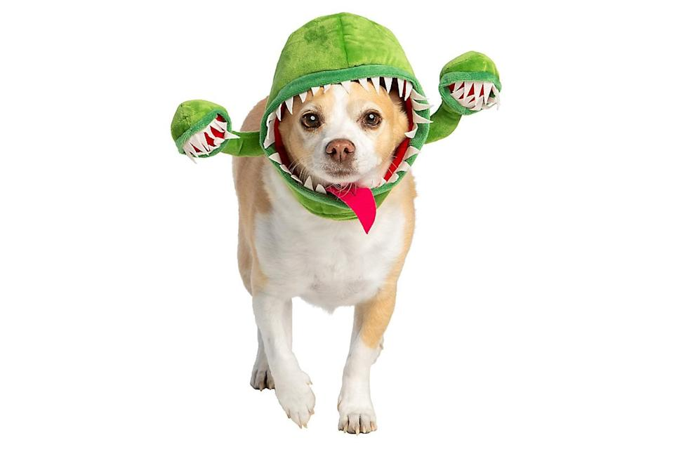 """<p>Growing two extra mouths is an interesting approach to getting more treats.</p> <p><strong>Buy it!</strong> Venus Fly Trap Headpiece Dog Costume, $9.99; <a href=""""https://www.petsmart.com/featured-shops/halloween/thrills-and-chillsandtrade-halloween-venus-fly-trap-headpiece-dog-and-cat-costume-63973.htm"""" rel=""""nofollow noopener"""" target=""""_blank"""" data-ylk=""""slk:PetSmart.com"""" class=""""link rapid-noclick-resp"""">PetSmart.com</a></p>"""