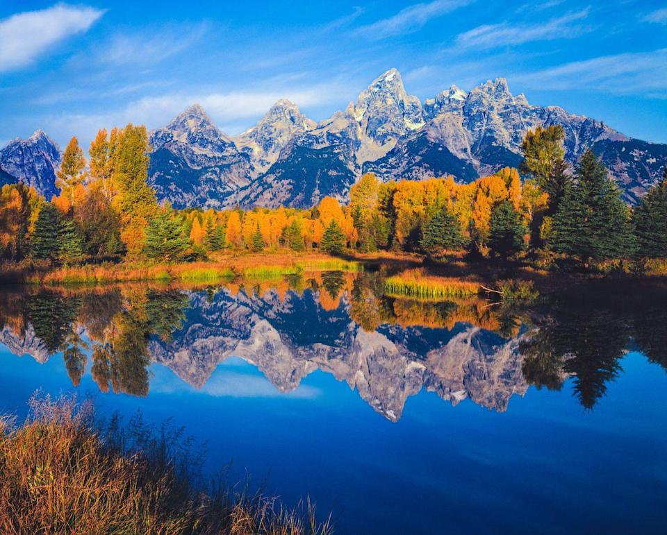"""<p><strong>Where to go:</strong> Grand Teton National Park is abuzz with activity each autumn as deer, moose, and bears prepare for winter and cottonwoods, aspens, and willows change from green to gold. </p><p><strong>When to go:</strong> <a href=""""https://www.nps.gov/grte/planyourvisit/fallcolor.htm"""" rel=""""nofollow noopener"""" target=""""_blank"""" data-ylk=""""slk:Late September"""" class=""""link rapid-noclick-resp"""">Late September</a></p><p><a class=""""link rapid-noclick-resp"""" href=""""https://go.redirectingat.com?id=74968X1596630&url=https%3A%2F%2Fwww.tripadvisor.com%2FHotels-g143029-Grand_Teton_National_Park_Wyoming-Hotels.html&sref=https%3A%2F%2Fwww.redbookmag.com%2Flife%2Fg34045856%2Ffall-colors%2F"""" rel=""""nofollow noopener"""" target=""""_blank"""" data-ylk=""""slk:FIND A HOTEL"""">FIND A HOTEL</a></p>"""