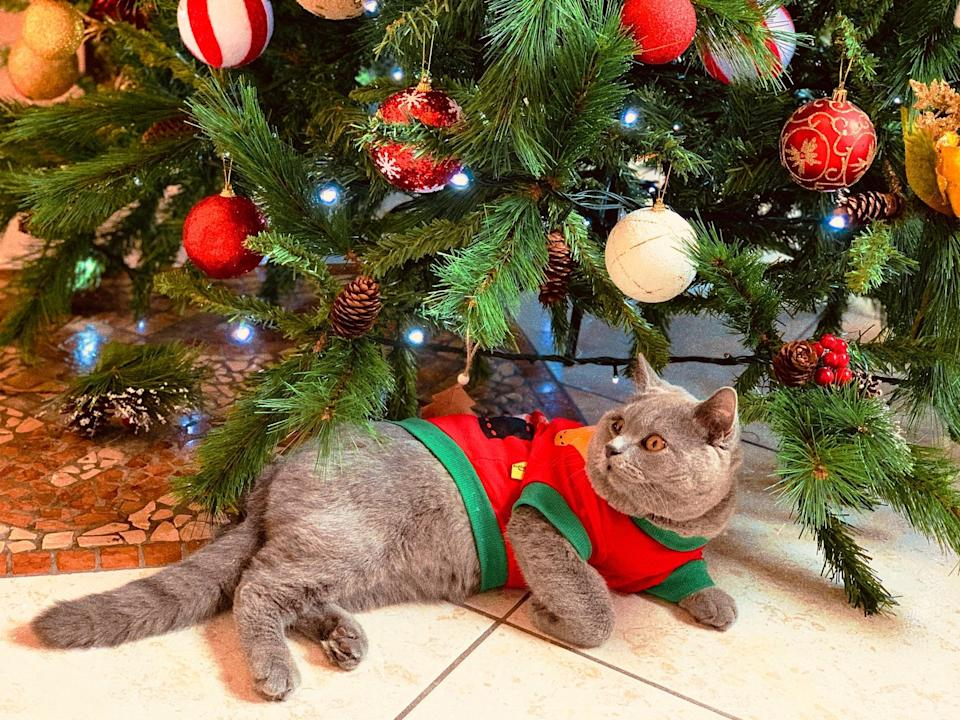 """<p> The little Christmas outfit this cat's wearing is so adorable. </p> <p><a href=""""http://media1.popsugar-assets.com/files/2020/12/21/859/n/1922507/f7e8355d2d7b1a5a_karolina-hotyur-PjYan0TMSpQ-unsplash/i/Download-Zoom-background-image-here.jpg"""" class=""""link rapid-noclick-resp"""" rel=""""nofollow noopener"""" target=""""_blank"""" data-ylk=""""slk:Download Zoom background image here."""">Download Zoom background image here.</a> </p>"""