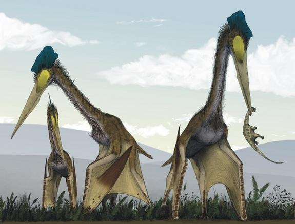Ancient Toothless Pterosaurs Once Dominated the World's Skies