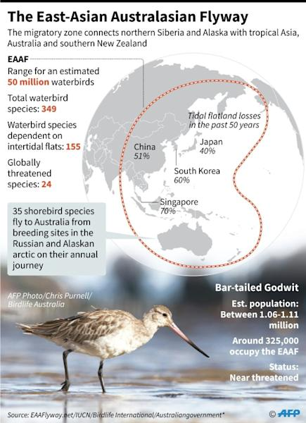 A bird migration zone links Siberia with tropical Asia and Australia for waterbirds including the Godwit whose flying skills have been compared to the new self-flying glider which uses machine learning