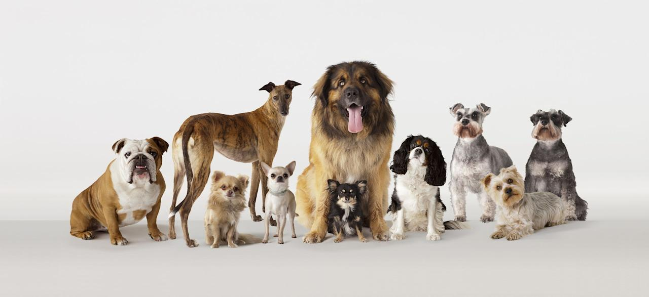 "<p>If you've ever felt like everyone on your block has the same dog, you might be onto something. Furniture company  <a href=""https://blog.joybird.com/most-popular-dog-breeds-by-state/"" target=""_blank"">Joybird</a> dug into Google Trends and American Kennel Club data to determine which breeds are the most popular in America. There were a few recurring favorites—namely shih tzus, rottweilers, and golden retrievers—but some may surprise you. </p>"