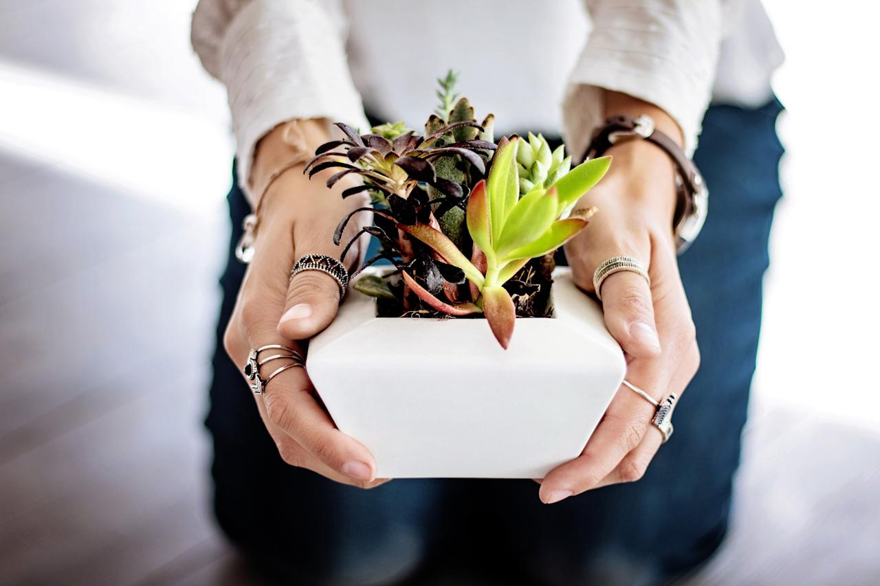 <p>Get some houseplants at a local nursery to purify your air, don't forget to return the little plastic pots. </p>