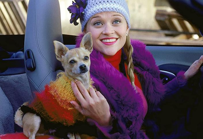 legally blonde mgm