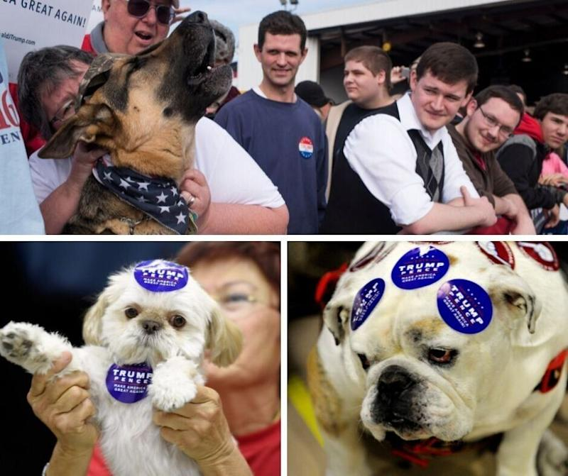 It doesn't matter how much support these dogs throw behind President Trump, he's not interested.  (Photo: HuffPost Life)