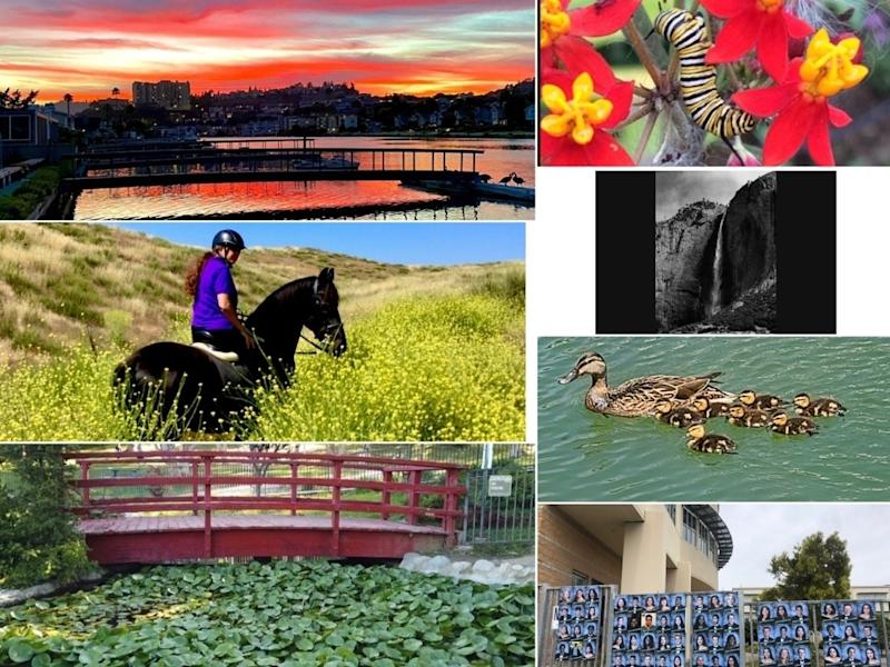 "Counterclockwise: ""Creeping Caterpillar""; ""Yosemite, Reopened""; ""Mama, 7 Teeny Ducklings""; ""Class Of 2020 Honored""; ""Stunning Lily Pond""; ""Hillside On Horseback""; ""Spectacular Marin Sunset"""