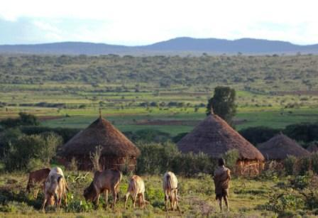 A young boy grazes his cattle close to the village
