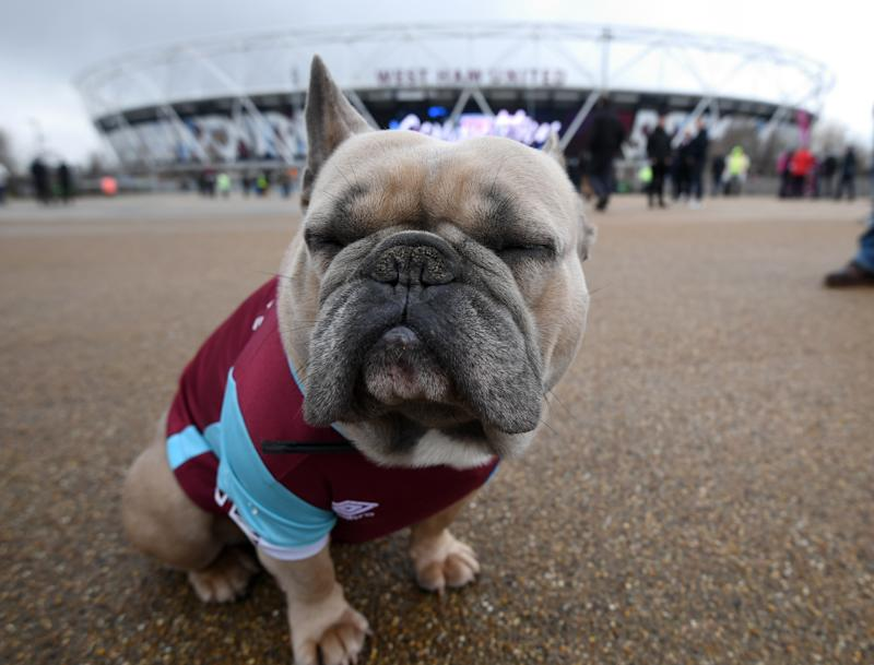 Snub-nosed dog breedsare known to be more vulnerable to flying-related health problems. (Victoria Jones/PA Images via Getty Images)