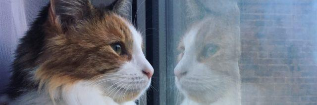 Ruthy's cat looking out a window.