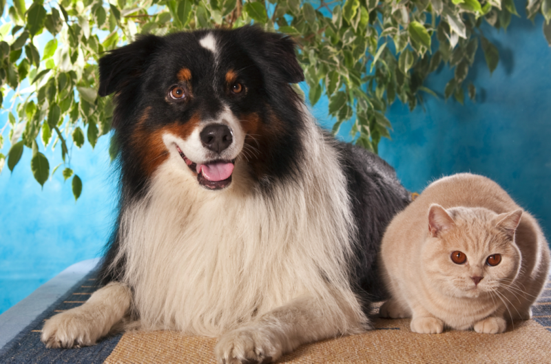 Researchers talked to pet owners who have a cat and a dog (Picture: Rex)