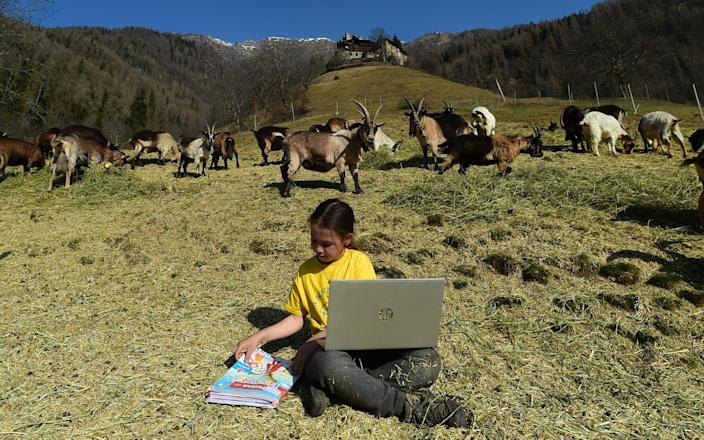 Fiammetta Melis, 10, studies with her laptop at the Samoclevo mountain pasture while her primary school is closed due to Covid restrictions - Pier Marco Tacca/Getty Images Europe