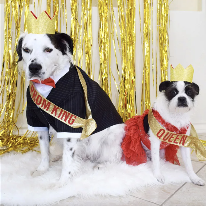 """<p>These pups are ready to dance the night away. </p><p><strong>Get the tutorial at <a href=""""https://www.dreamalittlebigger.com/post/doggo-prom-king-and-queen-pet-costumes.html"""" rel=""""nofollow noopener"""" target=""""_blank"""" data-ylk=""""slk:Dream a Little Bigger"""" class=""""link rapid-noclick-resp"""">Dream a Little Bigger</a>.</strong></p><p><a class=""""link rapid-noclick-resp"""" href=""""https://www.amazon.com/Sparkles-Adhesive-Childrens-Activities-Assorted/dp/B06Y2D2PZN/ref=as_li_ss_tl?tag=syn-yahoo-20&ascsubtag=%5Bartid%7C10050.g.4616%5Bsrc%7Cyahoo-us"""" rel=""""nofollow noopener"""" target=""""_blank"""" data-ylk=""""slk:Shop Glitter Craft Foam"""">Shop Glitter Craft Foam</a></p>"""