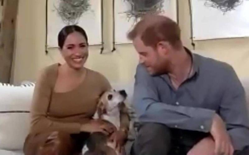 Meghan and Harry were joined by dog Guy for part of the interview - Evening Standard