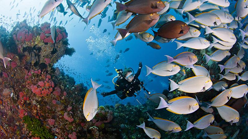 Diver is swimming happily with coral fishes in Indonesia