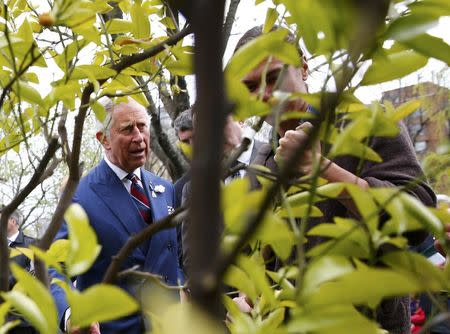 Britain's Prince Charles tours the Halifax Public Gardens in Halifax, Nova Scotia, in this file photograph dated May 19, 2014.  B REUTERS/Mark Blinch/files