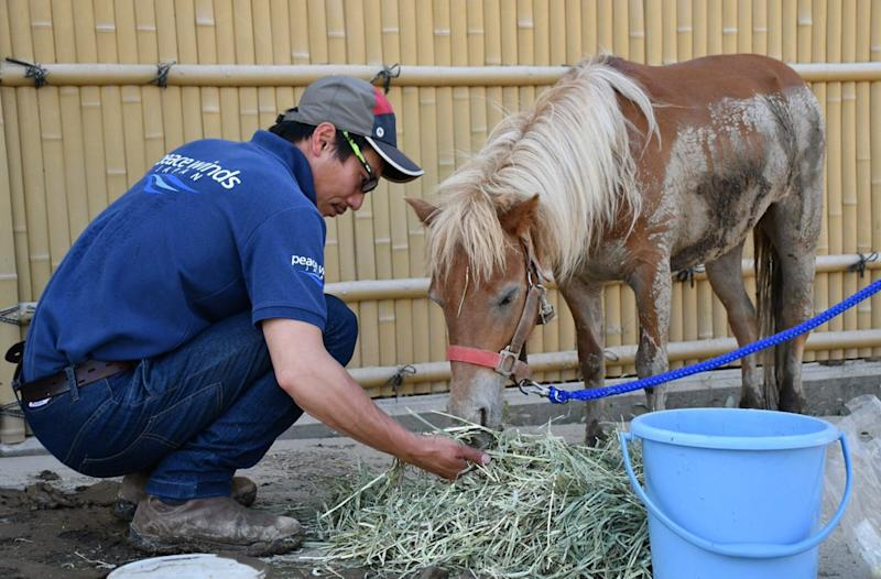 A miniature pony was stranded on a roof after powerful flooding in Japan