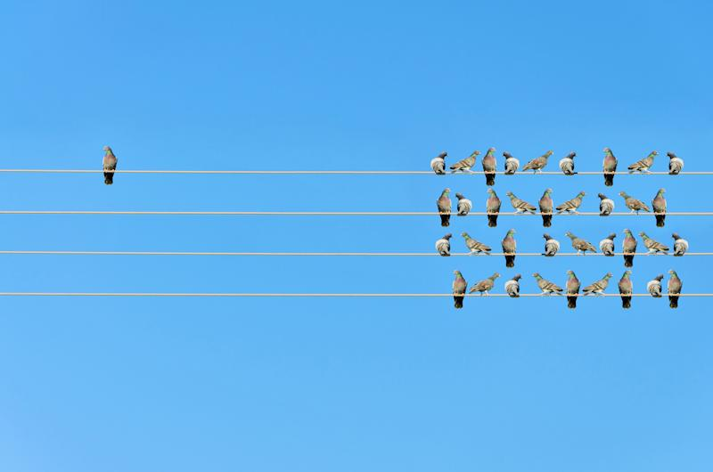 Birds on four electrical wires, with one bird sitting away from the others.