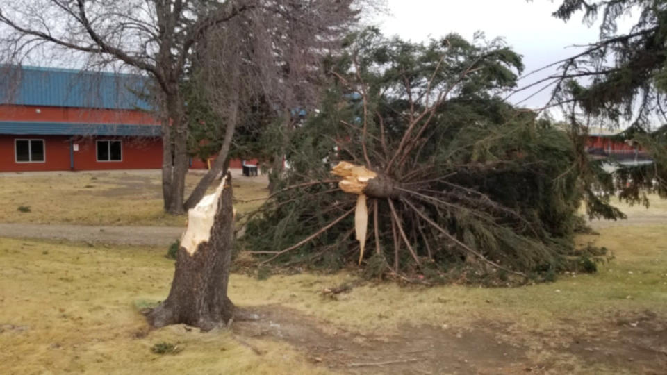 Powerful winds bring down trees, fuel blizzard conditions, dangerous travel