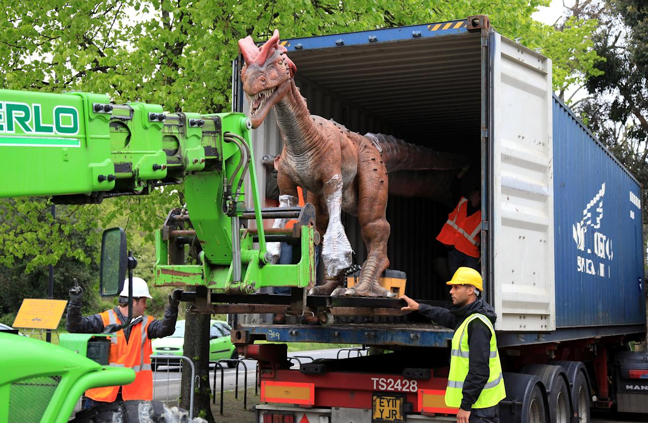 An animatronic Dilophosaurus dinosaur is moved from a lorry as it arrives at Bristol Zoo Gardens on May 14, 2012 in Bristol, England. Twelve animatronic dinosaurs arrived at Bristol Zoo Gardens this morning after being transported in crates from Texas, USA. They will form part of the zoo's summer exhibition 'DinoZoo' which opens later this month.  (Photo by Matt Cardy/Getty Images)