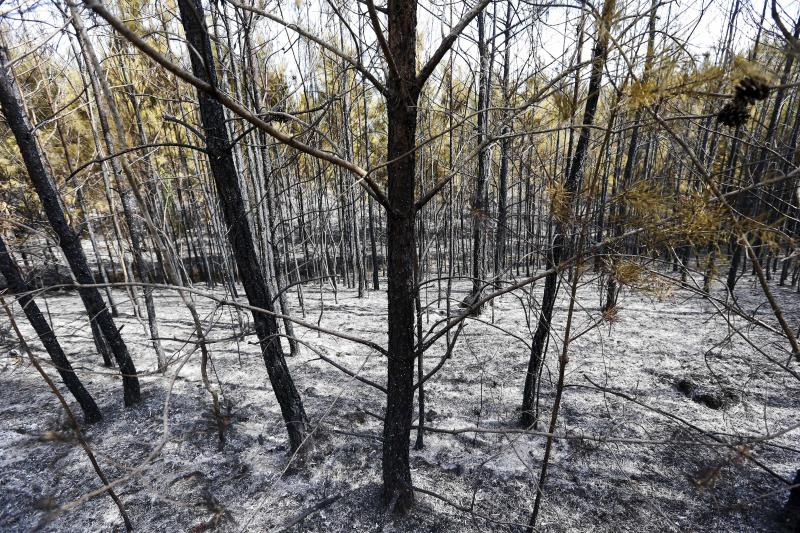 FILE - In this Oct. 10, 2016, file photo, a row of trees are damaged and covered in ash after a wildfire, due to drought conditions, broke out on Bone Dry Road in Kimberly, Ala. A draft federal science report on the effects of global warming breaks down how climate change has already hit different regions of the United States. (AP Photo/Brynn Anderson, File)