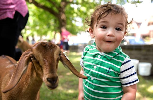 <p>Tal Guttman, 1, of Greenfield is surprised after getting kissed on the mouth by a goat during the Independence Day Celebration at Arsenal Park in Pittsburgh on Sunday, July 2, 2017. (Photo: Antonella Crescimbeni/Pittsburgh Post-Gazette via AP) </p>