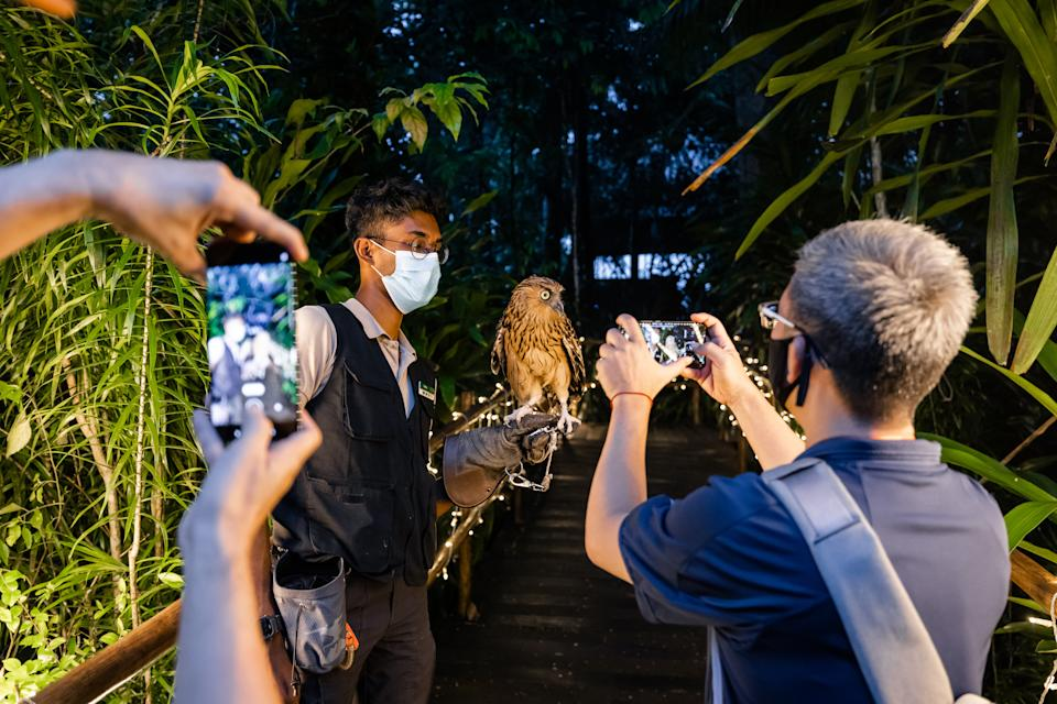 Mi Fans testing out Mi 11's low light photography and videography capabilities by taking photos of a Malay fish owl during a special animal encounter at Night Safari. (PHOTO: Xiaomi)