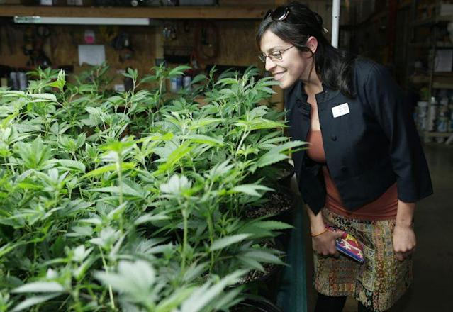 Rebecca Gasca, CEO of a consulting firm in Reno, Nev., looks over a crop of marijuana plants during a tour of marijuana retail and grow operations in Denver last year. (Photo: David Zalubowski/AP)