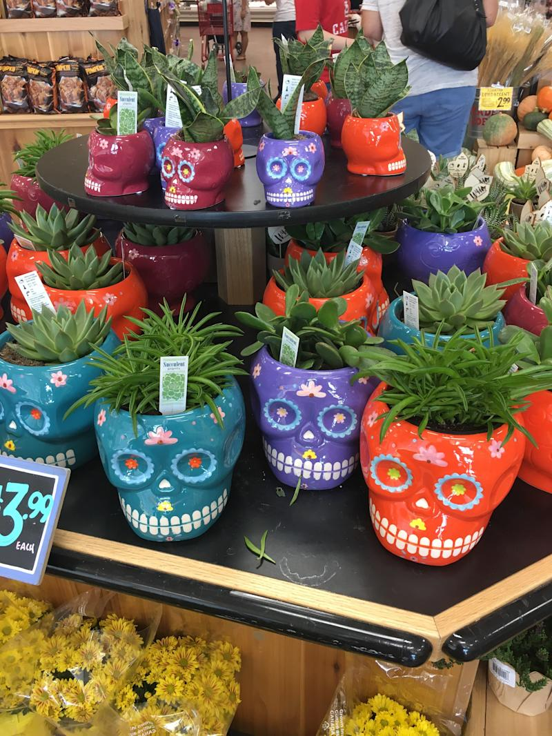 display of ceramic sugar skull planters with succulents planted in them at Trader Joe's