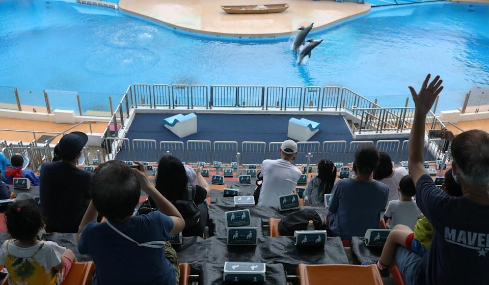 Visitors watch a dolphin show at Ocean Park in Aberdeen. Photo: K. Y. Cheng