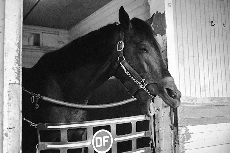 """FILE - In this Sept. 13, 1962, file photo, Carry Back yawns in his stall at Belmont Park in Elmont, N.Y. When jockey Johnny Sellers asked the horse for more on what should have been a thrilling stretch run to victory, the horse """"spit the bit"""" _ a racing term meaning he simply didn't feel like running anymore, resulting in a seventh-place finish behind 65-1 long shot Sherluck. As I'll Have Another prepares to attempt to win the Belmont Stakes in his quest to become the 12th Triple Crown champion and first in 34 years on Saturday, June 9, 2012, The Associated Press takes a look at some of the 19 horses who won the Kentucky Derby and the Preakness, but came up short in the final leg of the Triple Crown, and how the race unfolded. (AP Photo, File)"""