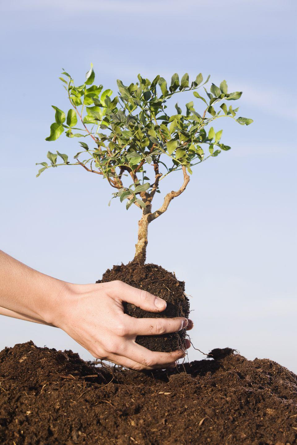 "<p>Perhaps the most obvious of the bunch, but what better way to care for the Earth than to replenish it. Billions of trees are cut down every year to create the things that we use every day. Why not give one back?</p><p><strong>RELATED:</strong> <a href=""https://www.goodhousekeeping.com/home/gardening/g26426369/trees-for-small-yards/"" rel=""nofollow noopener"" target=""_blank"" data-ylk=""slk:9 of the Best Trees for Small Yards"" class=""link rapid-noclick-resp"">9 of the Best Trees for Small Yards</a></p>"