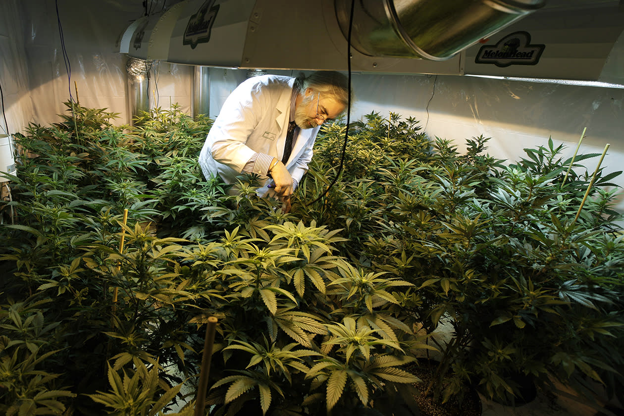 Jake Dimmock, co-owner of the Northwest Patient Resource Center medical marijuana dispensary, works with flowering plants in a grow room in Seattle. After voters weighed in on election day, Colorado and Washington became the first states to allow legal pot for recreational use, but they are likely to face resistance from federal regulations.