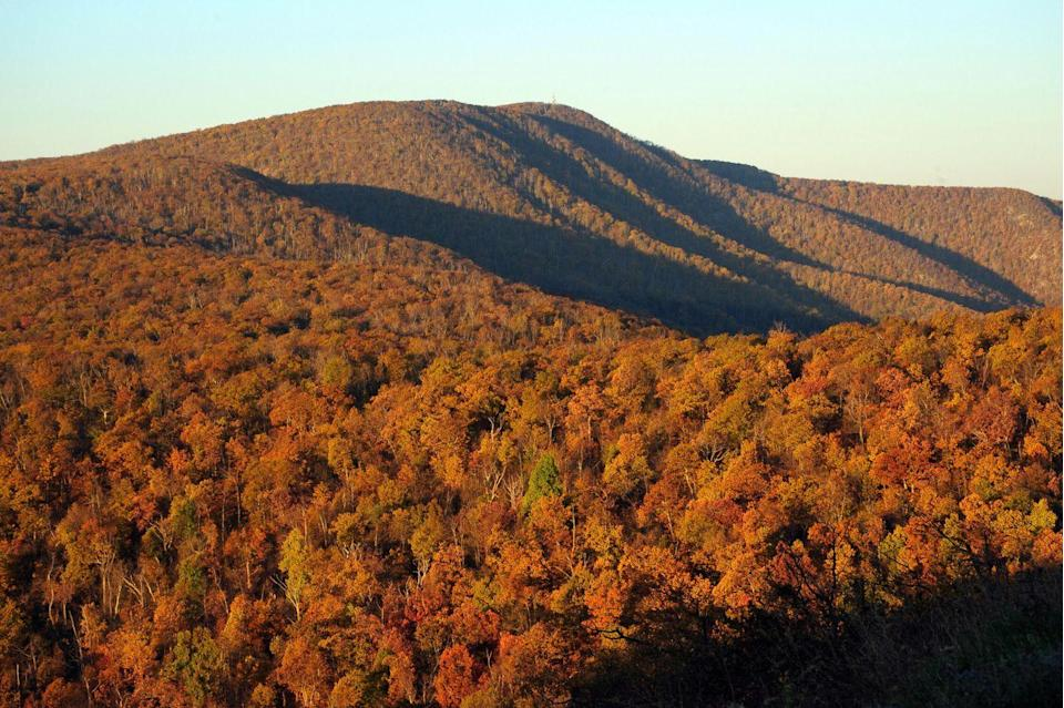 """<p>The rolling hills of Virginia are beautifully met by the crispness of fall—ideally enjoyed on a hike or drive before winter takes over. Many prefer to take in the views from <a href=""""https://www.virginia.org/scenicskylinedrive/"""" rel=""""nofollow noopener"""" target=""""_blank"""" data-ylk=""""slk:the scenic Skyline Drive"""" class=""""link rapid-noclick-resp"""">the scenic Skyline Drive </a>anytime from late September to mid-November.</p>"""