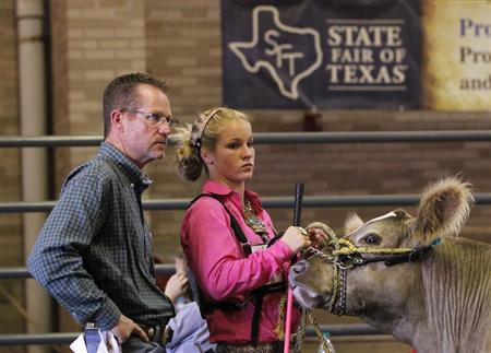Kelley and her father wait prior to showing her Charolais steer in the prospects competition at the State Fair of Texas in Dallas