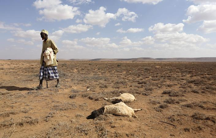 File Photo: A man walks past the carcass of sheep that died from the El Nino-related drought in Marodijeex town of southern Hargeysa, in northern Somalia's semi-autonomous Somaliland region, April 7, 2016. (REUTERS/Feisal Omar)