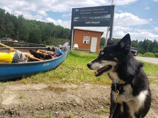 Luna, a dog belonging to Michael Yellowless, has been missing since July 2, after she leaped out of a canoe into the northwestern Ontario wild while the two were on a cross-Canada charity trek. (Submitted by Wayne Chisholm - image credit)
