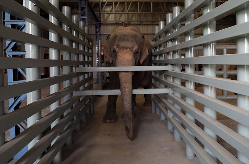 This female elephant, Maya, is seen inside one of the hospital's enclosures.  (Anushree Fadnavis / Reuters)