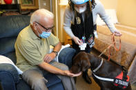 Kida, a chocolate Labrador, visits with Sal Gonzales, 79, in his room at The Hebrew Home at Riverdale in New York, Wednesday, Dec. 9, 2020. New dog recruits are helping to expand the nursing home's pet therapy program, giving residents and staff physical comfort while human visitors are still restricted because of the pandemic. (AP Photo/Seth Wenig)