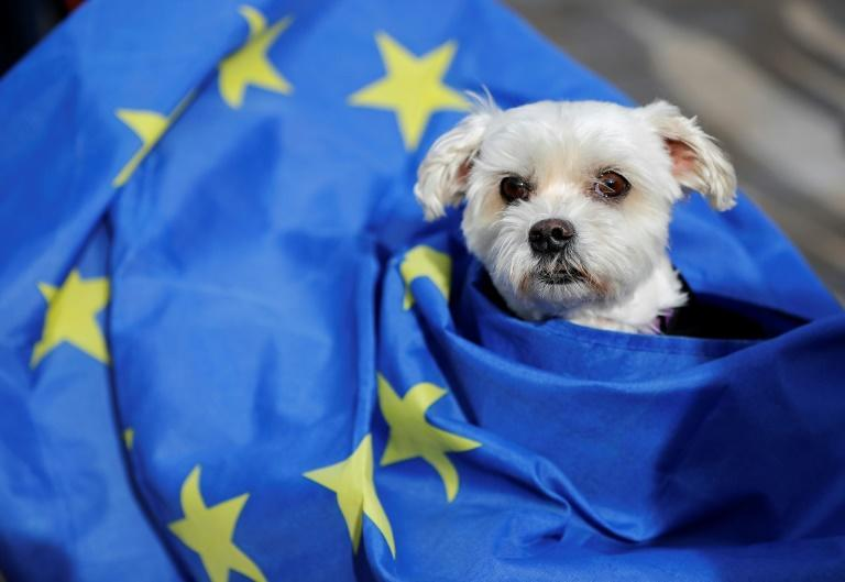 New regulations on taking pets abroad, post-Brexit, pose a potential headache for their owners