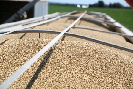 FILE PHOTO:    Soybeans fill a trailer at a farm in Buda, Illinois