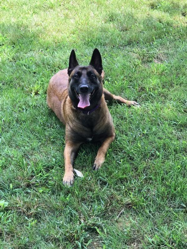 Roux, an adopted a Belgian Malinois, alerted her owners to the neighbor's house being on fire in Franklin.