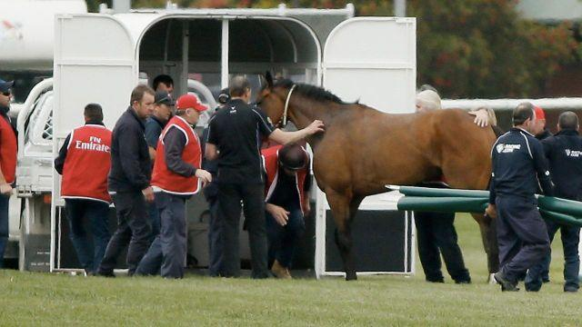 Regal Monarch took a hard fall on the home turn at race four. Pic: Getty