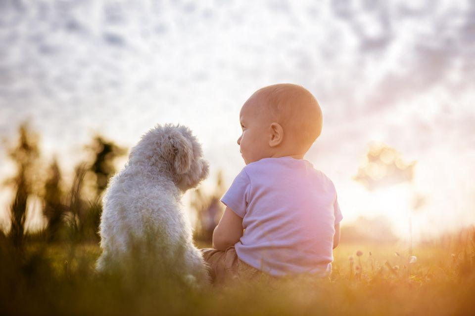 We want your dogs and babies to be best friends. Photo: Getty