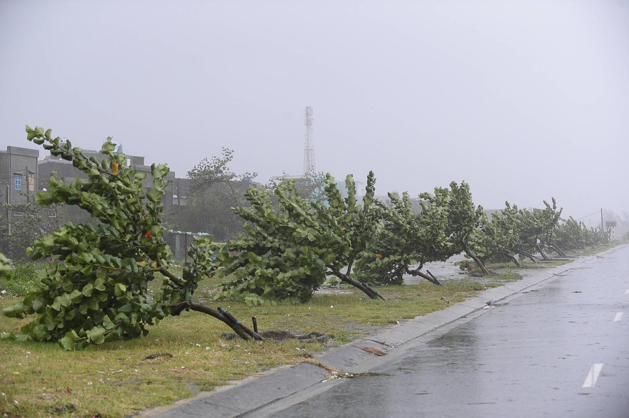 Fallen trees, caused by Typhoon Nari, lie by the side of a street in Vietnam's central Danang city, October 15, 2013. Typhoon Nari knocked down trees and damaged hundreds of houses in central Vietnam early on Tuesday, forcing the evacuation of tens of thousands of people, state media said. More than 122,000 people had been moved to safe ground in several provinces, including Quang Nam and Danang city, by late Monday before the typhoon arrived, the official Tuoi Tre (Youth) newspaper reported. REUTERS/Duc Hien (VIETNAM - Tags: DISASTER WEATHER ENVIRONMENT)